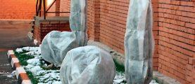 Как и чем укрыть садовые растения на зиму