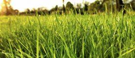 Как садить газон или памятка юному газоноводу