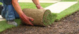 Сколько стоит купить и уложить рулонный газон?