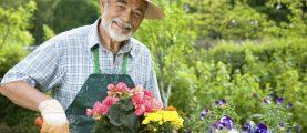 Сколько стоит пригласить на участок садовника?