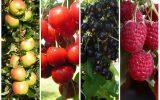 Белорусский сад без усилий: фруктово-ягодные сорта, которые приживутся. Рекомендации эксперта