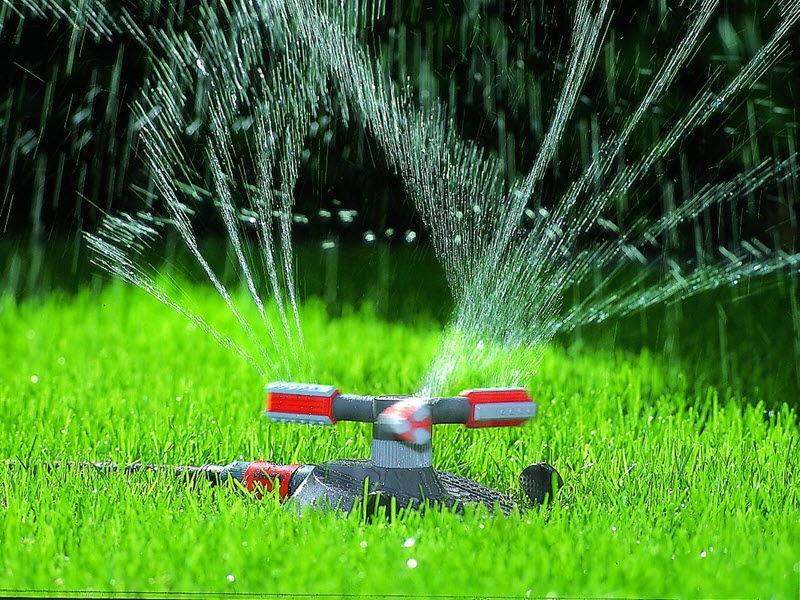 Поливать газон в жару желательно каждый день