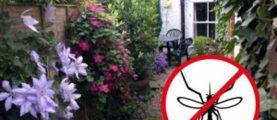 10 растений, которые отпугивают комаров