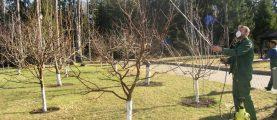Профилактика болезней белорусского сада: минимум химии, червей и парши. Советы эксперта