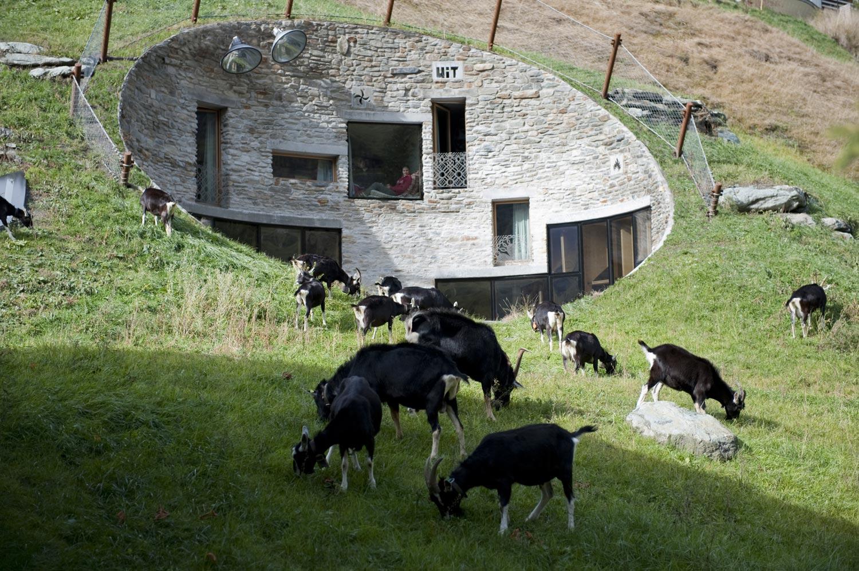 Стоят, как родные. Пять домов, идеально вписавшихся в окружающую среду