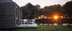 «Заряжая» овец в стены. Как британцы придумали согревать модульные дома
