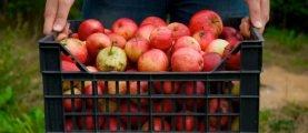Триатлон садовода: обработать, подкормить, собрать урожай! Поэтапная защита растений летом