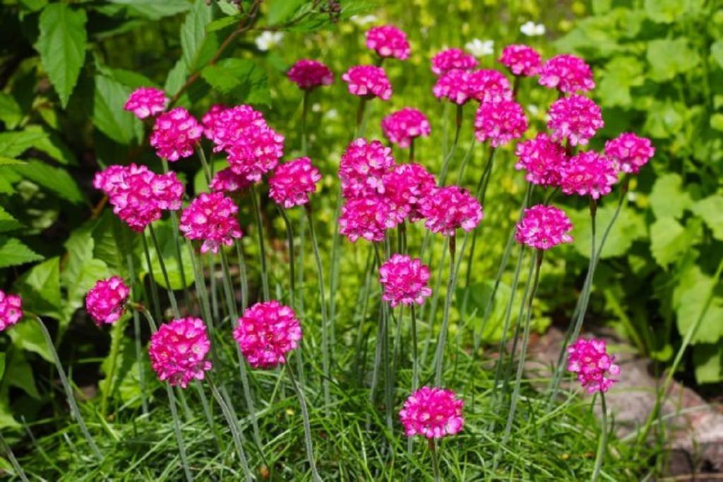 ТОП-7 многолетников, которые цветут все лето