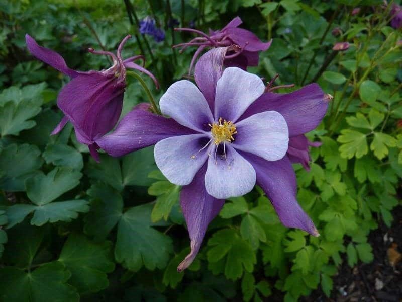 Какие растения цветут все лето в палисаднике