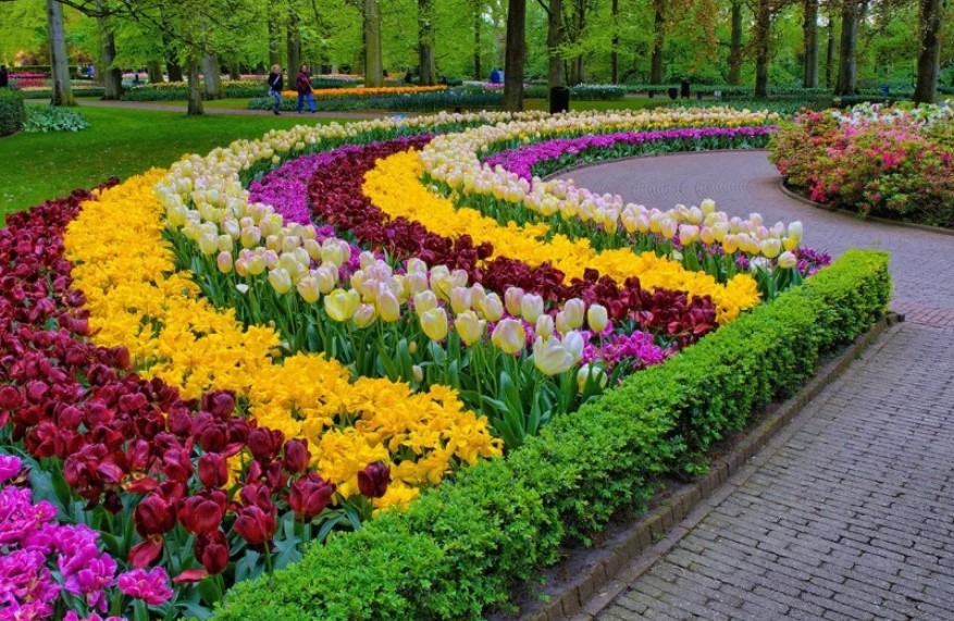 Виды клумб и цветников для дачи и загородного дома