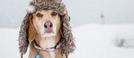 Как не оставить свою верную сторожевую собаку без защиты от холода в зимнее время года