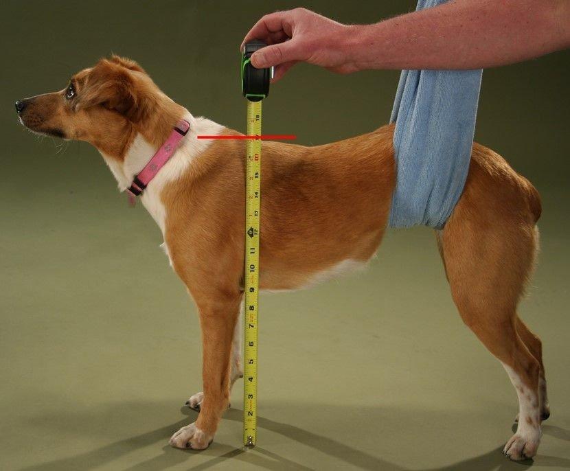 Лежанка для собаки своими руками: мягкие тканевые гнёздышки и миниатюрные деревянные диваны