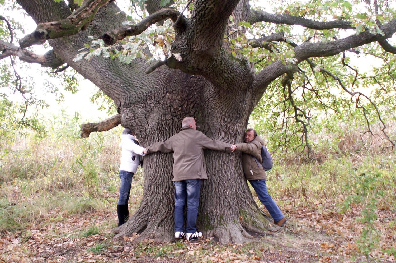 Особенности материалов твёрдых пород дерева и сфера их применения